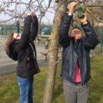 comment-nourrir-les-oiseaux-lhiver