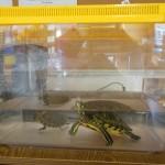 les-tortues-d%c3%a9barquent-chez-mmes-catherine-et-rita