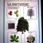 le-marronnier